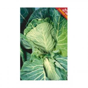Dutchman Cabbage Seeds