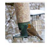 nyger bird