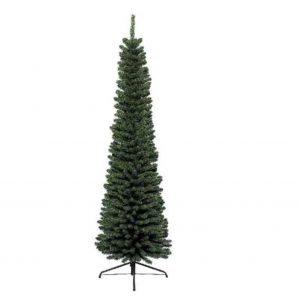 Pencil Pine Tree