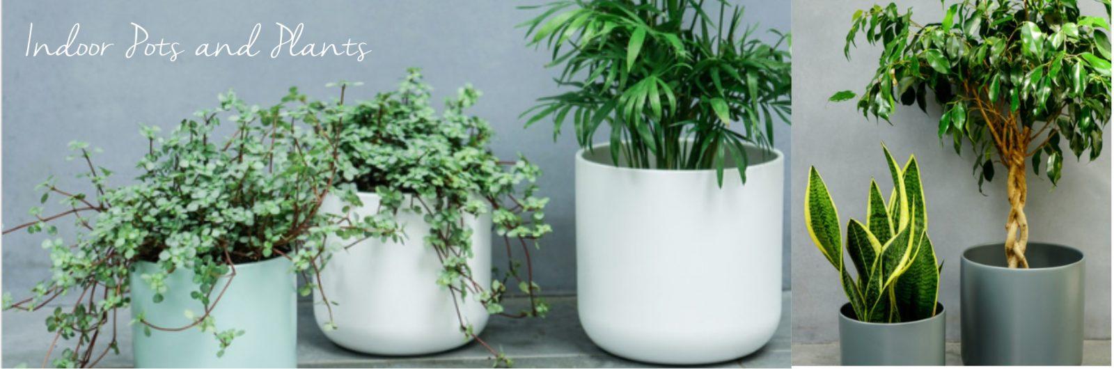 INDOOR PLANTS & POTS