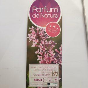 Mini Lilac 'Flower Fiesta Pink'