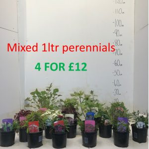 Mixed 1LTR Perennials