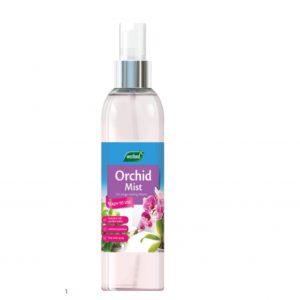 Orchid Mist