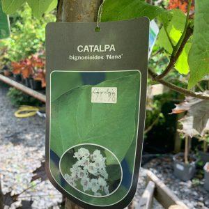 1140 Catalpa