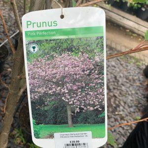 1146 PRUNUS