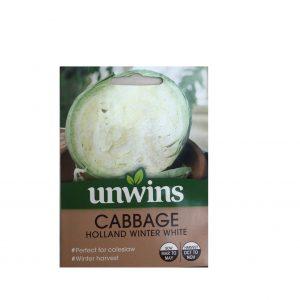 Cabbage ( Holland Winter White )
