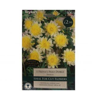1 Freya's Paso Doble ( Dahlia )