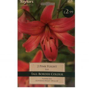 2 Pink Flight ( Lily )