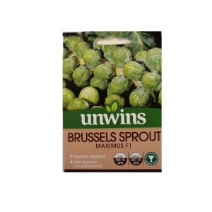 Brussels Sprout ( Maximus F1 )