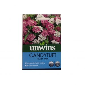 Candytuft ( Fairy Mix )