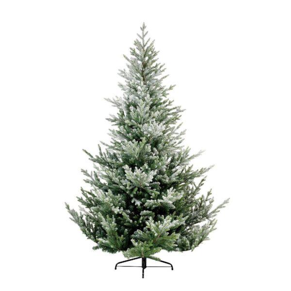 Norway Spruce Snowy Tree